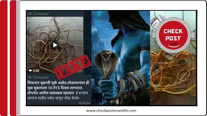 Shivnag tree root viral video fact check post marathi