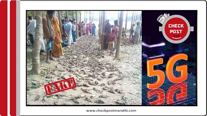 5G testing kills birds viral claim is fake checkpost marathi fact