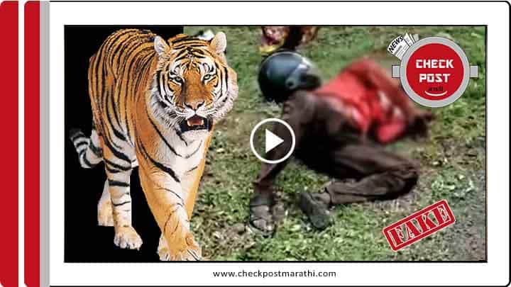 tiger attacked on bike riders viral video isnt of Gautala sanctury checkpost marathi fact